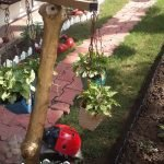 outdoor greenery